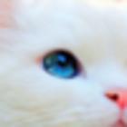 † themalleycat †