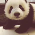 Pandaa.