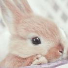 fashion_bunny