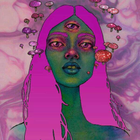 Majenta Mimosa