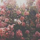 Lovely ❤ ♡ (*_^)