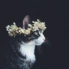 Erinlovesblackcats