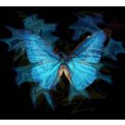 papillon love