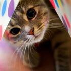 Şanslı Kedi