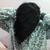 sp_nan_alshmry