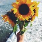 •Sun~Flower•
