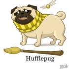 The_Hufflepuff_Pug