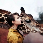 Girafeeinheart