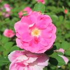 Julie Cinquin ♥
