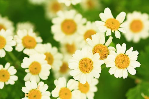 Most popular tags for this image include: daisy