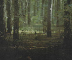 forest