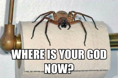 Most popular tags for this image include: spider