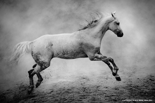 The_white_horse_ii_by_54ka_large