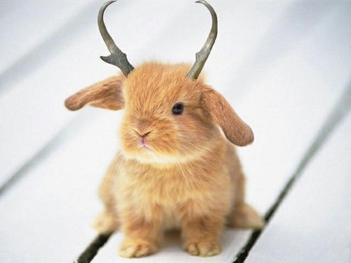 Cuteness / Jackalope by ~VampyNeo on deviantART