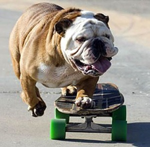 Skateboarding_dog_large