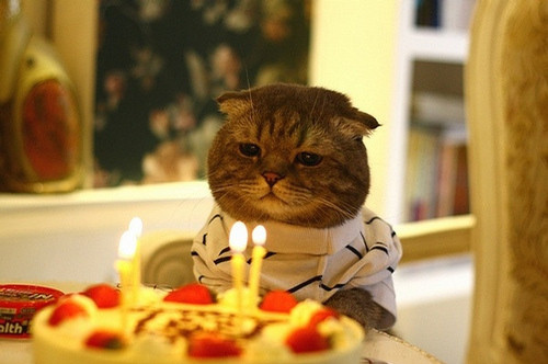 Birthday-cake-candle-cat-cute-humor-favim.com-71802_large