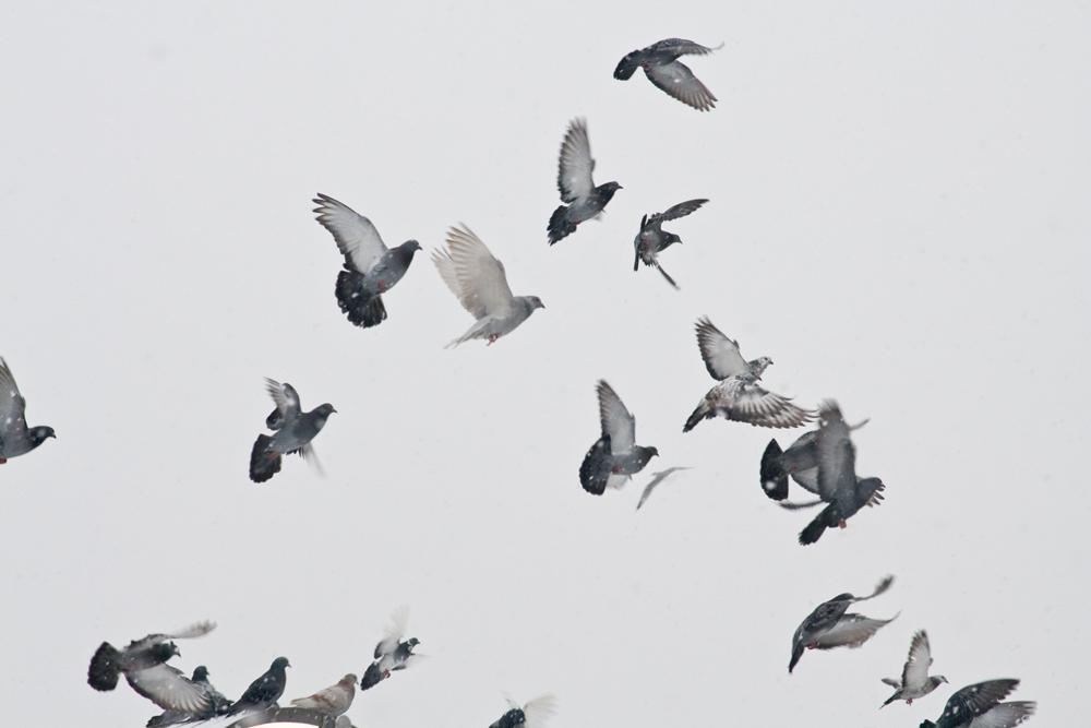 flying birds in the sky tattoo wwwimgkidcom the
