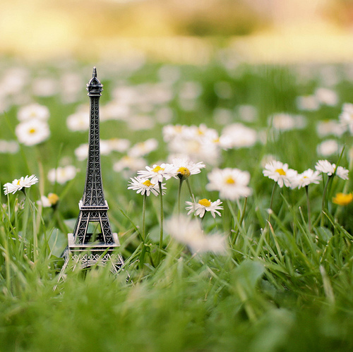 Bautifal-city-flowers-grass-naturaly-paris-favim.com-78856_large