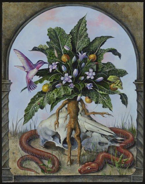 Мандрагора лекарственная (Mandragora officinalis) - Тридевятое Царство