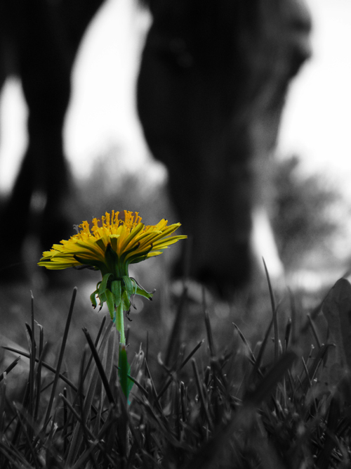 Horse_and_flower_by_klau14-d3j4qd2_large