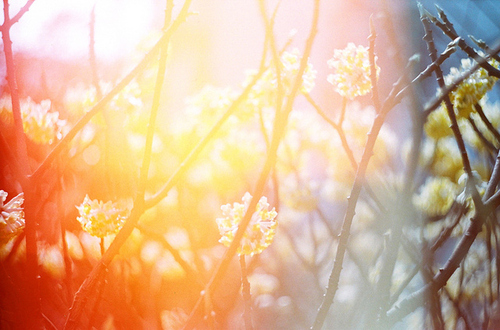 Beautiful-light-nature-photograph-photography-pretty-favim.com-53739_large
