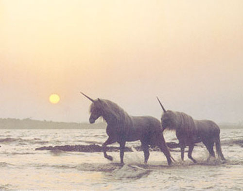 Beach-morning-ocean-soft-sun-unicorn-favim.com-77038_large
