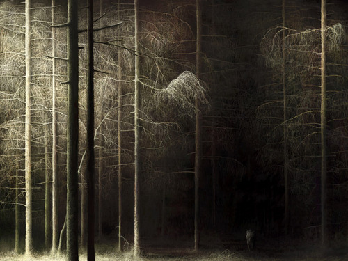 Forest_by_lukpazera_large