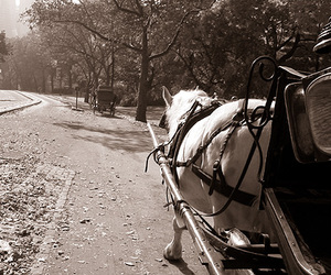 horse carriage park ride