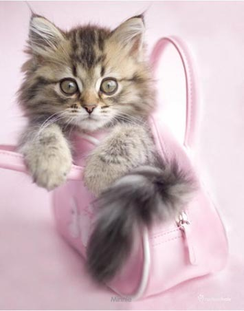 Lgmpp50153+minnie-the-kitten-in-a-handbag-rachael-hale-mini-poster_large