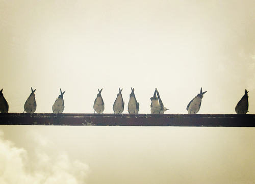 Birds__by_adrianasaysgeesus_large
