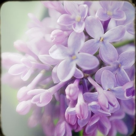 bright, flowers, glowing, pastel, purple, romantic - inspiring picture on Favim.com
