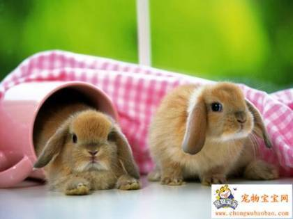 Cute-little-bunnies1_large