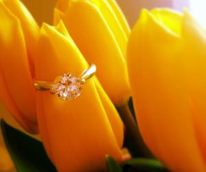 tulip ring yellow flower