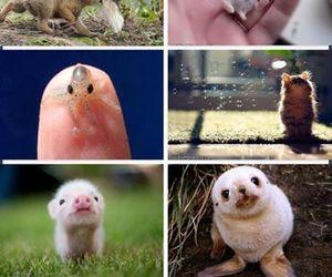 animal