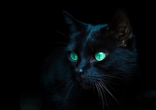 Beautiful-black-cat-cute-dark-green-favim.com-92616_large