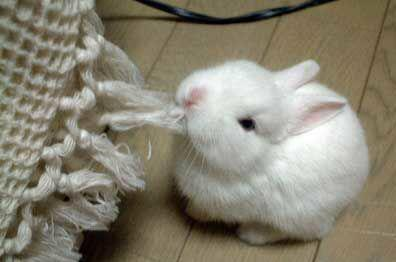 http://data.whicdn.com/images/11544545/so_cute_rabbit_large.jpg