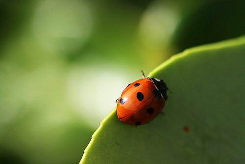 Beautiful-gorgeous-ladybird-nature-plant-summer-favim.com-95183_large