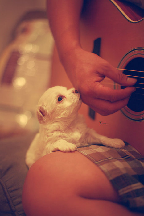 Beautiful-cute-dog-guitar-love-photography-favim.com-96367_large