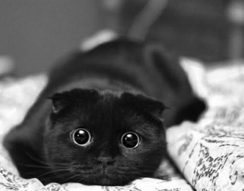 черная киска фото