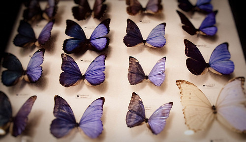 preserved butterflies