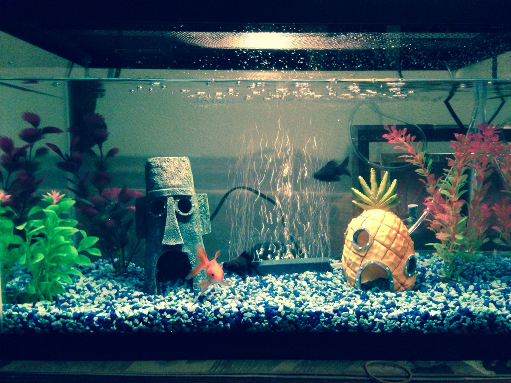 Our New Cute Spongebob Inspired Fish Tank Just Missing