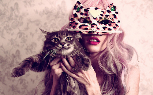 Dikaya,cat,animal,cats,cute,fashion-a23d416aaa035367b321a2b5f3d38e41_h_large_large
