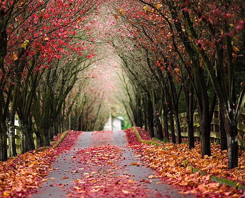 Scenery,nature,photography,road,autumn,path-ff317383a36c2dcf7ec75771e77812c2_h_large