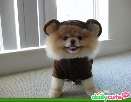 puppy bear - DailyCute.net - your head a splode with the cuteness!! ^_____^