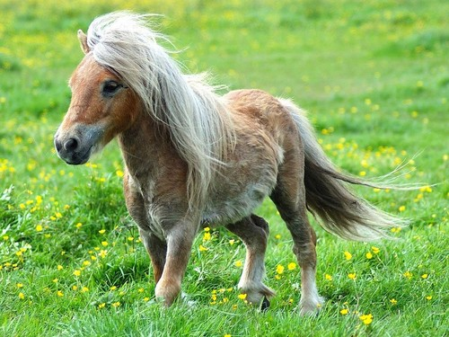 Cute_pony_with_hair_blowing_in_wind_large
