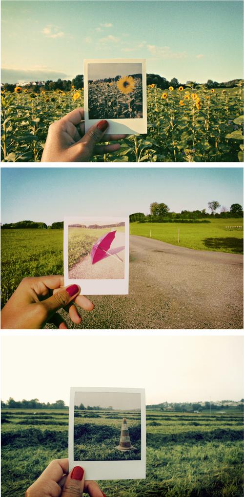 Cone-flower-grass-green-i-like-image-favim.com-62033_large