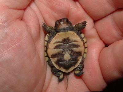 [Image: animal-aww-awwww-baby-critter-Favim.com-..._large.jpg]