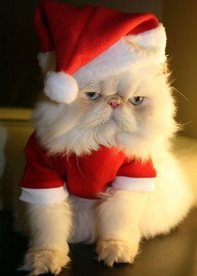 http://data.whicdn.com/images/12601523/cat-in-santa-hat_large.jpg