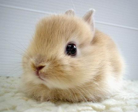 http://data.whicdn.com/images/12625598/another_cute_bunny_by_m2pg_large.jpg