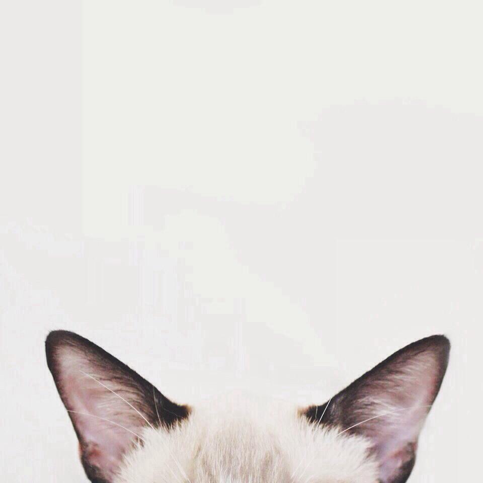 Group Of Tumblr Wallpapercute Cat
